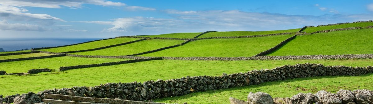 Hill of farm fields in the Terceira island in Azores with blue sky_586342745