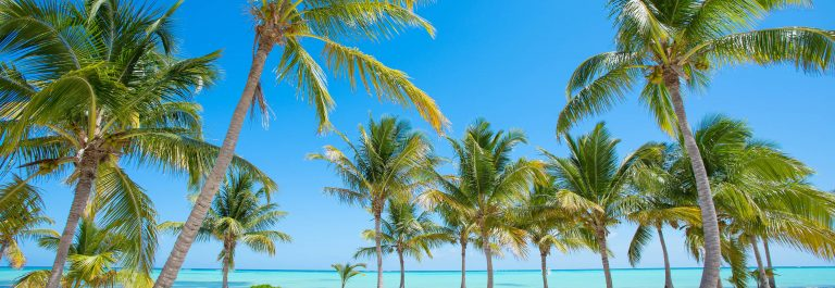 Tropical-beach-with-palm-trees-shutterstock_265093823