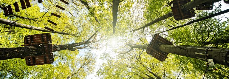 Adventure-climbing-high-wire-park-with-the-sun-in-the-trees-shutterstock_189767111
