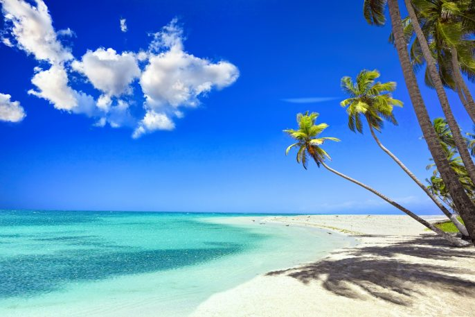 Tropical white sand beach in Caribbean island with coconut trees