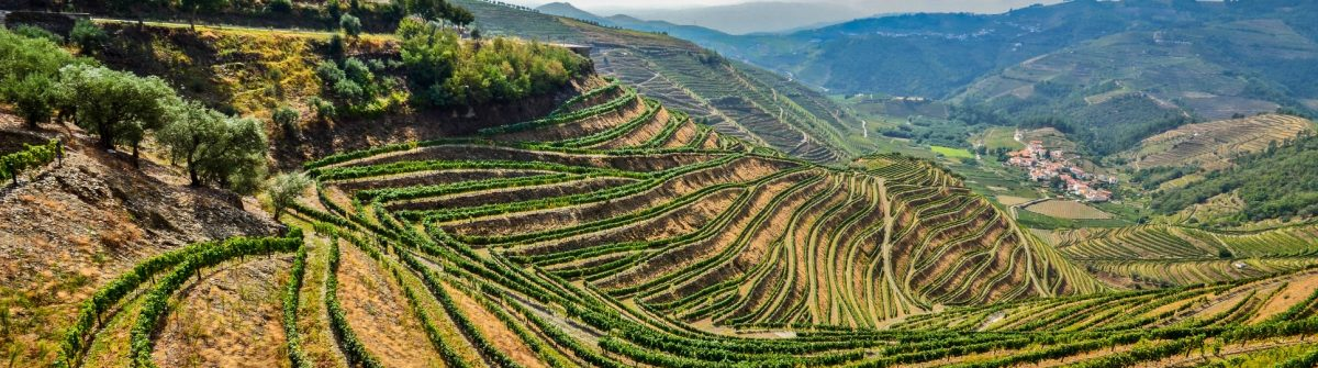 Douro-Valley-Vineyards-near-Pinhao-Portugal-iStock_55474000_XLARGE-2