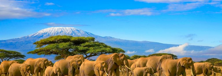 Herd-of-african-elephants-on-a-safari-trip-to-Kenya-and-a-snow-capped-Kilimanjaro-mountain-in-Tanzania-in-the-background-under-a-cloudy-blue-skies.-Image-shutterstock_678502927