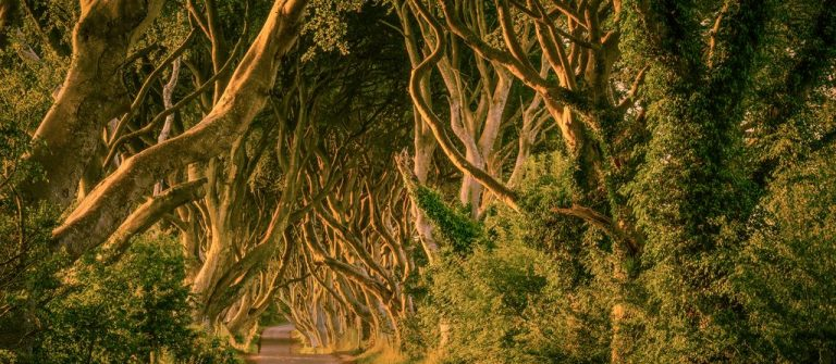 Ireland_Dark-Hedges_Game_of_Thrones-Forums-in-Konflikt-stehende-Kopie-2016-01-19