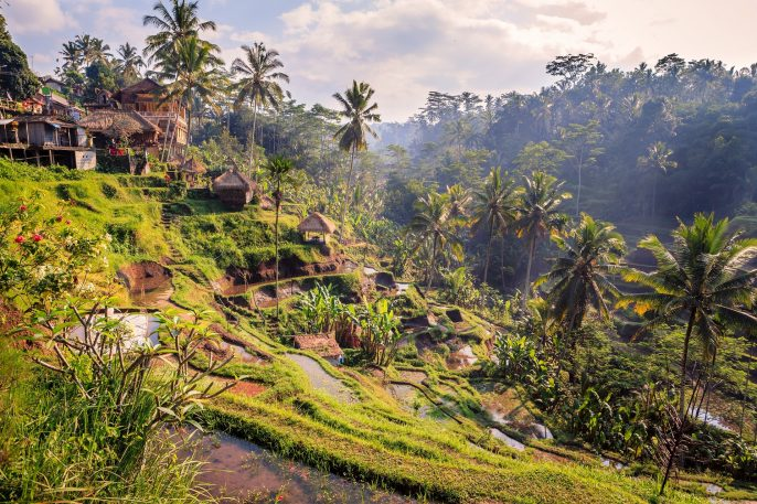 Spectacular-rice-fields-in-the-jungle-and-the-mountain-near-Ubud-in-Bali-shutterstock_316997570