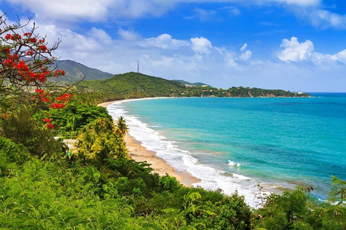 Beautiful-tropical-summer-view-of-Puerto-Rico-with-red-flowers-and-a-white-beach-Image-shutterstock_419173447-1