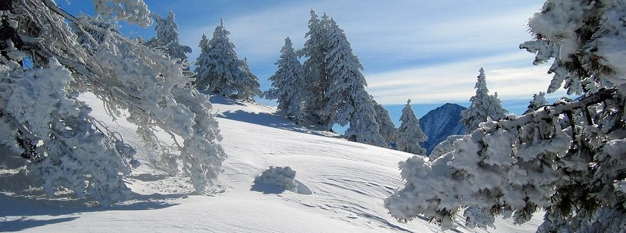 Mountain-and-snowy-forest.-Pyrenees.-Lerida-Spain_519787267_900x600