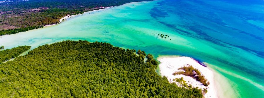 Tropical-Island-of-Zanzibar-shooting-with-the-drone.-Place-the-mangrove-forest-of-Michamvi-shutterstock_575439871_900
