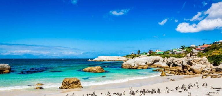 Kapstadt_Sudafrika_African-Penguin-Colony-at-BeachCape-Town-South-Africa-iStock_22731343_900x600
