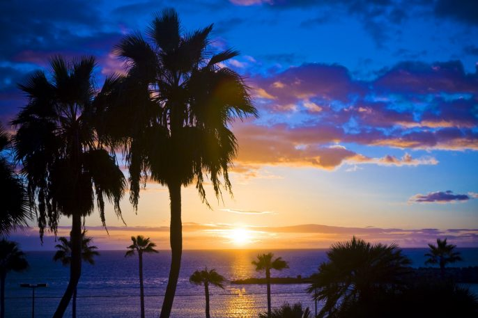 Palm-trees-silhouette-at-sunset-Gran-Canaria-Spain_shutterstock_106662254