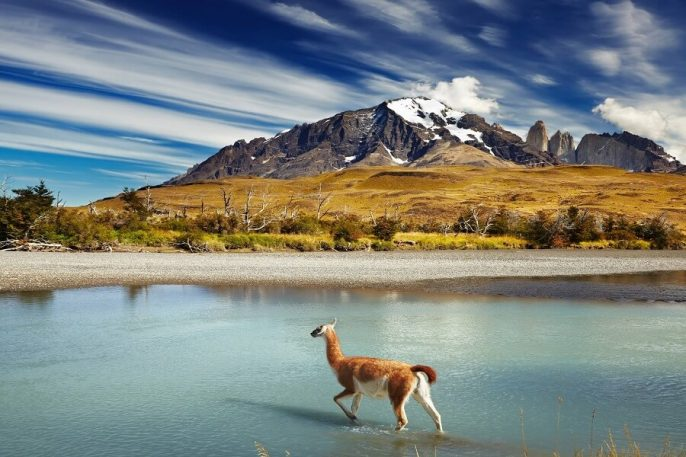 chile_guanaco_torres-del_paine_patagonia_lake_mountain_shutterstock_114775342_900
