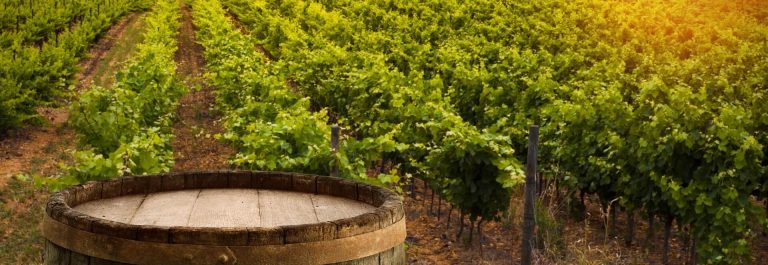 Red-wine-with-barrel-on-vineyard-in-green-Tuscany-Italy_423112891